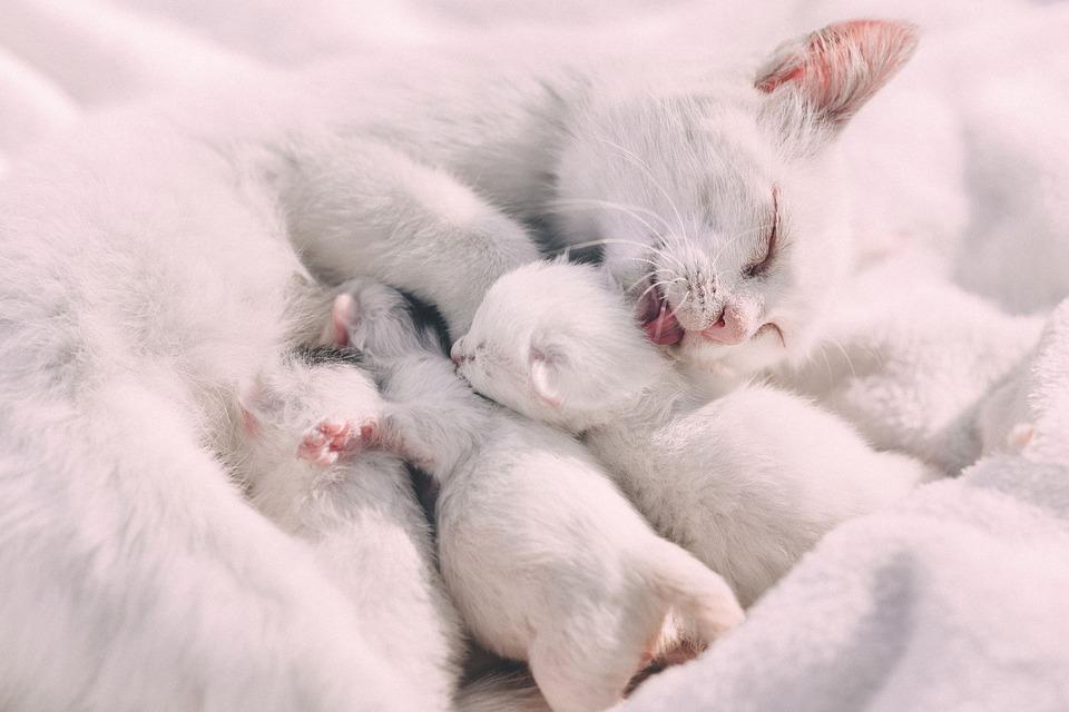 porque-los-gatos-amasan2