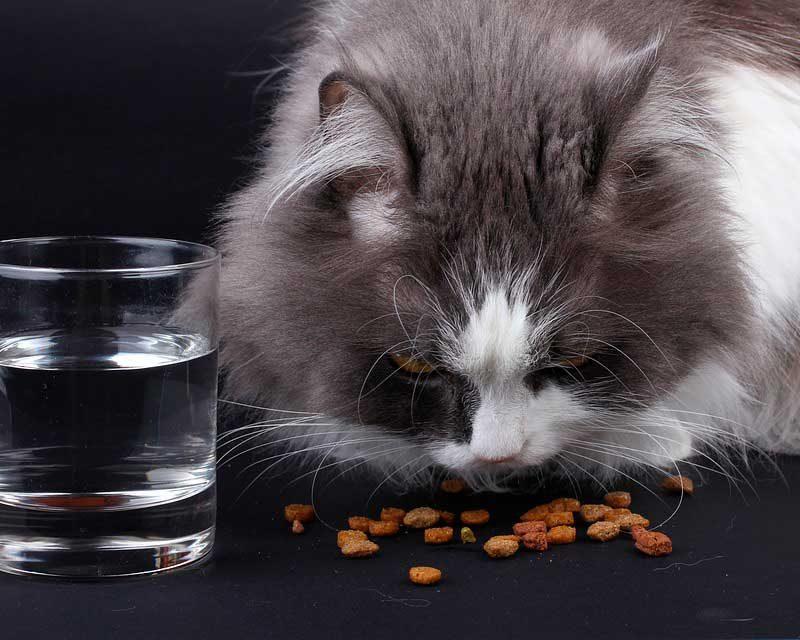 ¿Por qué les cambié la comida a mis gatos? 4 Tipos de alimentos que podemos brindar a nuestro gato