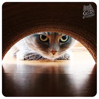 Datos Curiosos sobre Gatos Curiosos