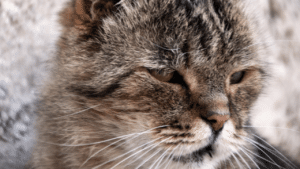 que significa soñar con gatos agresivos