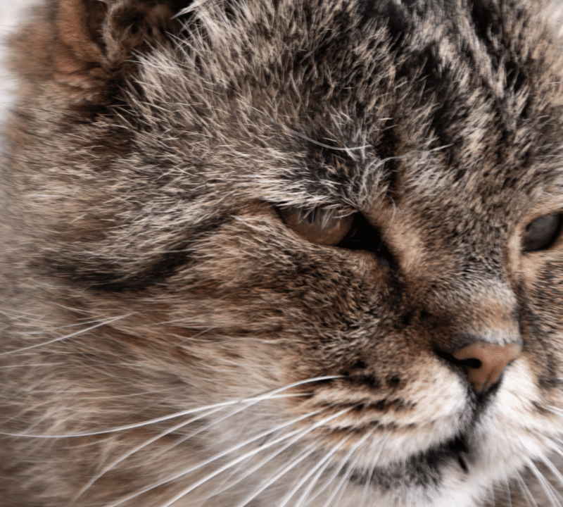 Soñar con gatos agresivos: ¿Cuál es su significado?