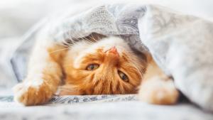 plantas tóxicas para los gatos