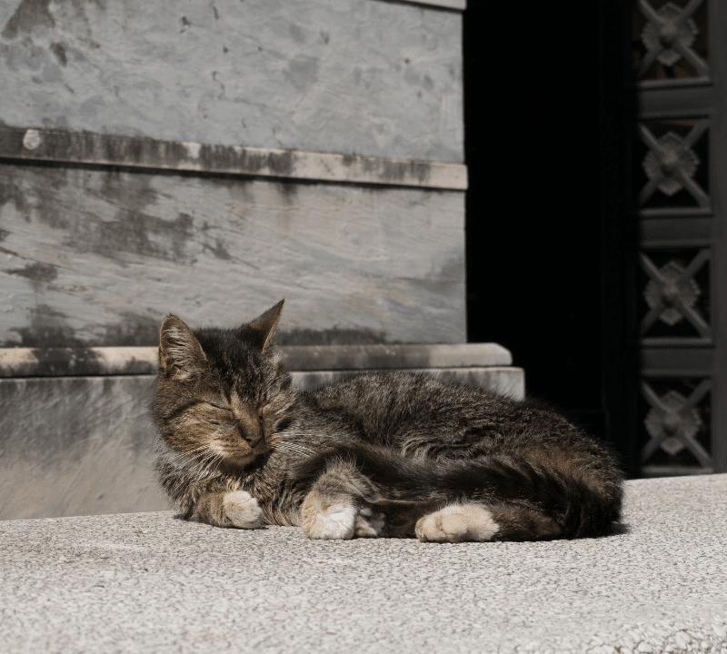 ¿A los cuántos días los gatos abren los ojos?
